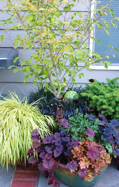 Perennial container combinations wih heuchera hamamelis for Perennial plant combination ideas
