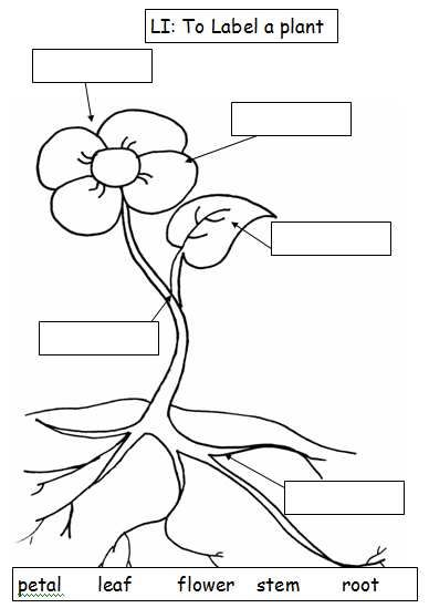 science worksheets for grade 1 parts of plants