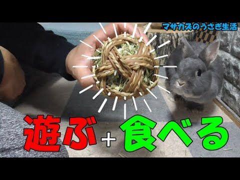 遊びながら牧草を食べれるウサギのおもちゃ マルカンのわら ラタンボール Youtube ウサギのおもちゃ ウサギ おもちゃ