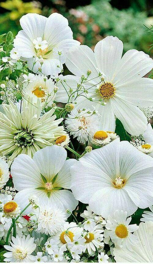 25+ Paisajes de flores blancas inspirations