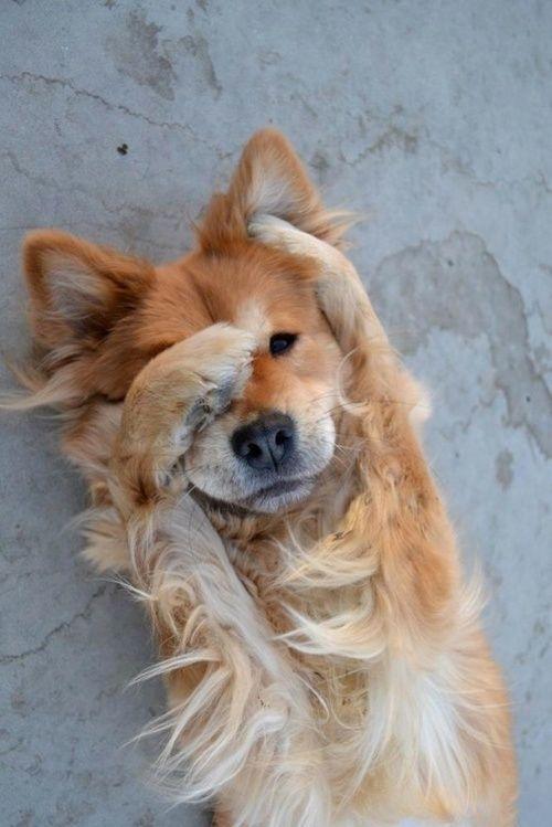 Cute Dog Hiding It's Face