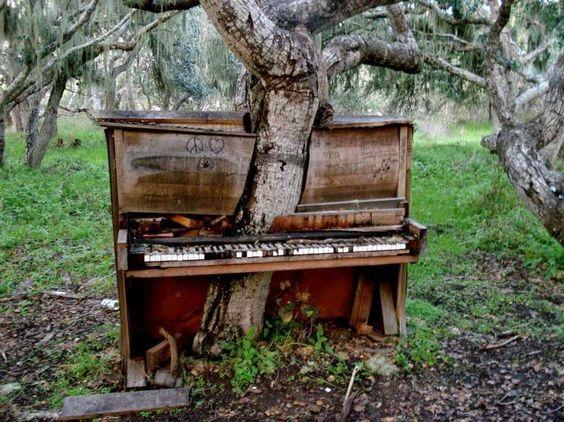 Uma árvore crescendo por meio de um piano abandonado