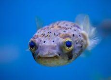 blue fish funny sealife sea Wallpaper