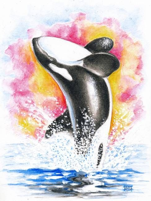 luna the orca whale Luna the solitary young orca is killed 13 march 2006 - 9:29am wdcs regrets to report the death of luna, the young male orca (killer whale)  luna, known to.