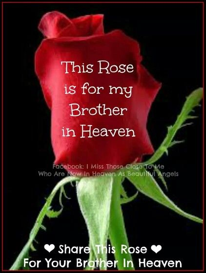 I know this is corny but this rose is for you in heaven..A ...