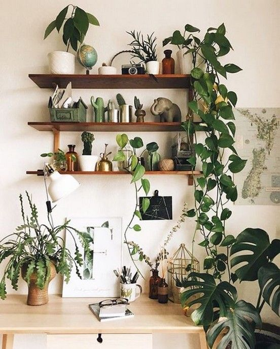 70 Best Cozy House Garden Indoor Plants Wall Decor Inspirational Designs Page 32 Of 72 Trendy Elves House Plants Decor Interior Plants Plant Decor Small beautiful house plants