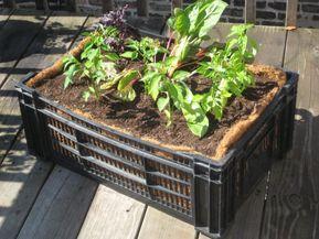 Plastic Crate Gardening Milk Crate Boogie I Mean Milk Crate Planters Milk Crates Garden Containers Milk Crate Furniture