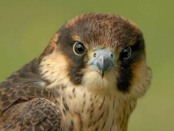 :): Birds Birdhouses, Beautiful Photos, Beautiful Colors, Beautiful Animals, Gods Colors, Animals And Birds, Beautiful Birds, Pretty Bird Colors, Animals Birds Raptors