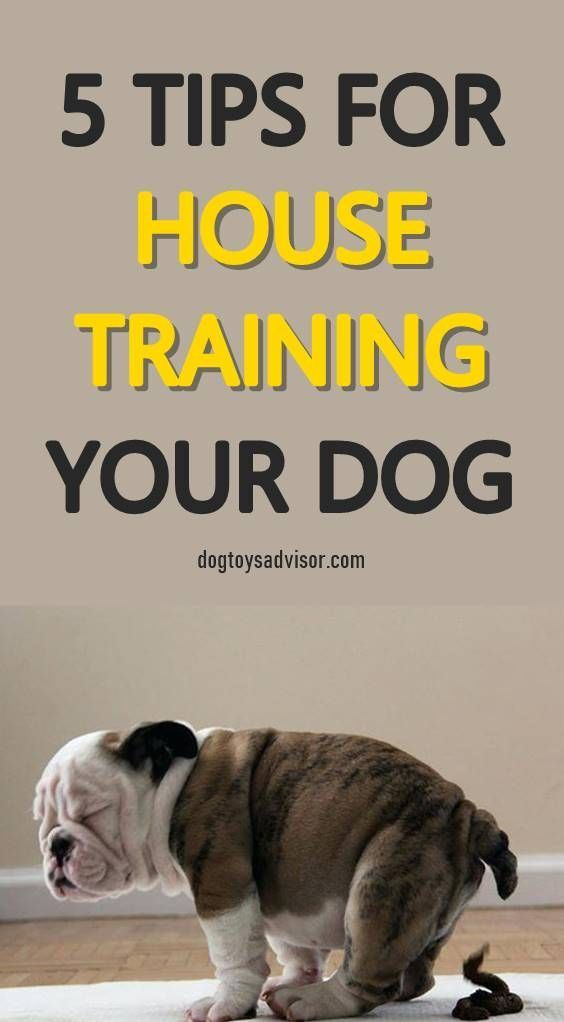 Tips To Potty Train A Puppy With Images Potty Training Puppy