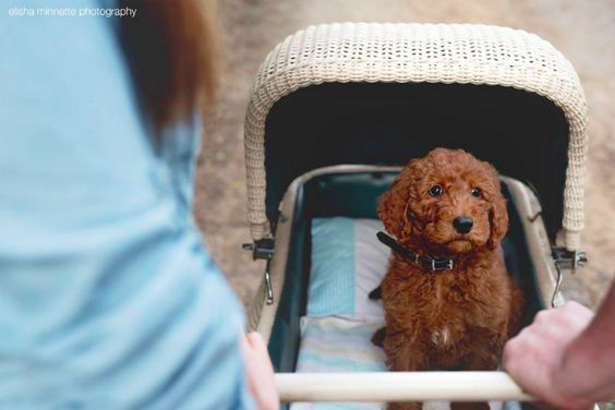 One way to ditch the lease. #refinery29 http://www.refinery29.com/2015/08/92744/baby-photo-shoot-dog-humphrey#slide-2