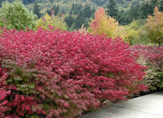 30 Ways To Color Your Yard This Fall Easy Garden Dwarf Burning