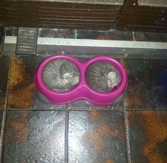 gatos-durmiendo-2 (14)