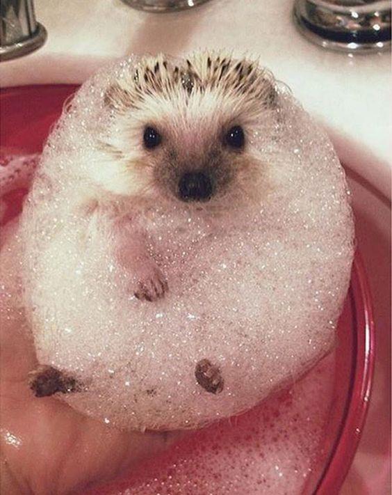 animales que toman el baño