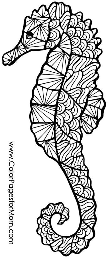 seahorse coloring page | ✐♋adult colouring~under the sea ~ fish ... - Cute Baby Seahorse Coloring Pages