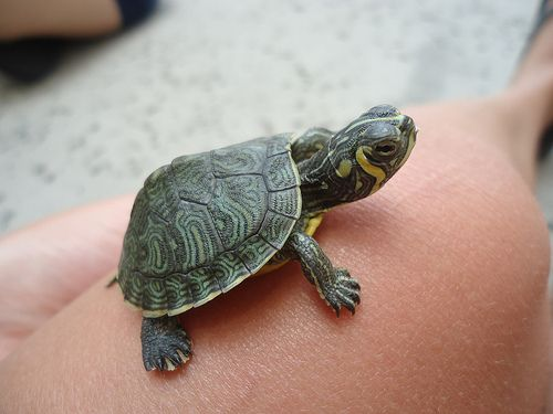 cute turtle - Buscar con Google