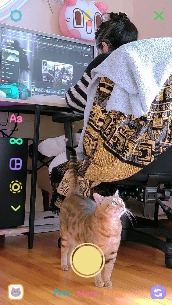 monthly favorites september 2021 | soyvirgo.com cat life lovely cat lovers
