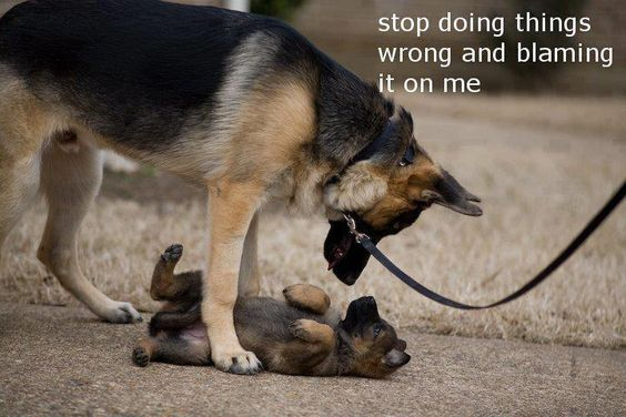 Big dog telling little pup to stop getting him in trouble.