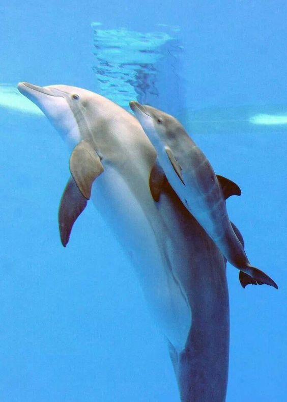 Newborn dolphin