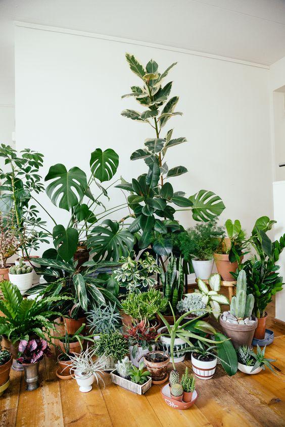 My plantgang: monstera deliciosa, ficus elastica, cacti, tillandsia, succulents and friends. Houseplants.
