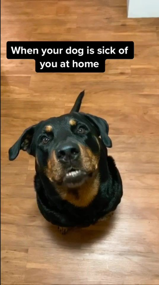 Pin By Lola On Amazing Amaya Dog Life Your Dog Dogs