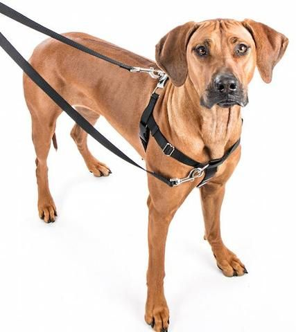 Freedom No Pull Harness Dog Harness Aggressive Dog Dogs