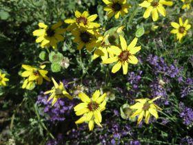 Edible Plants For Your Desert Herb Garden   Tucson Gardening | Examiner.com