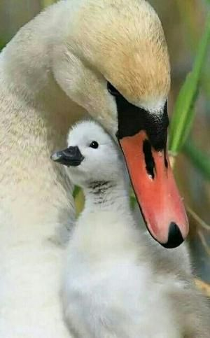 A MOTHER'S LOVE! by clare