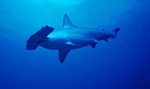 photos merveilleuses animaux marins