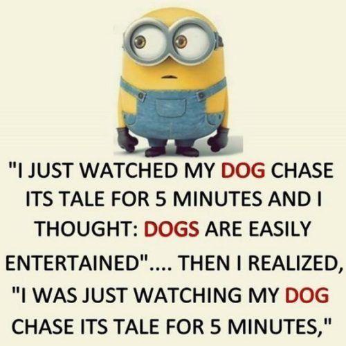 35 Hilarious Minions Memes Memes Minion Funny Minion Memes Minions Funny Funny Minion Quotes