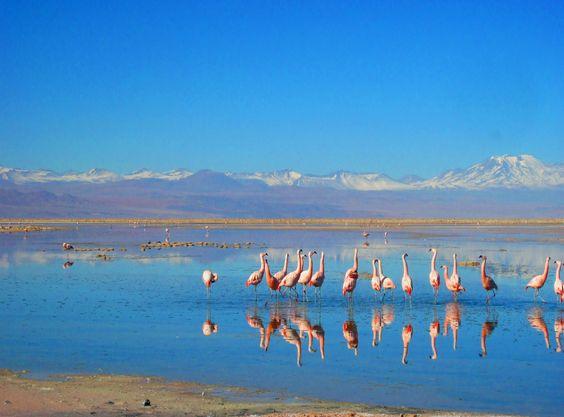 Laguna Chaxa en Reserva Nacional Los Flamencos. Foto de Katherine Silva Vásquez.