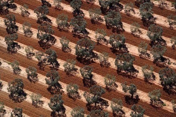 スペイン アンダルシアのオリーブ農園