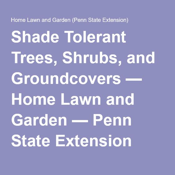 Shade Tolerant Trees, Shrubs, And Groundcovers — Home Lawn And