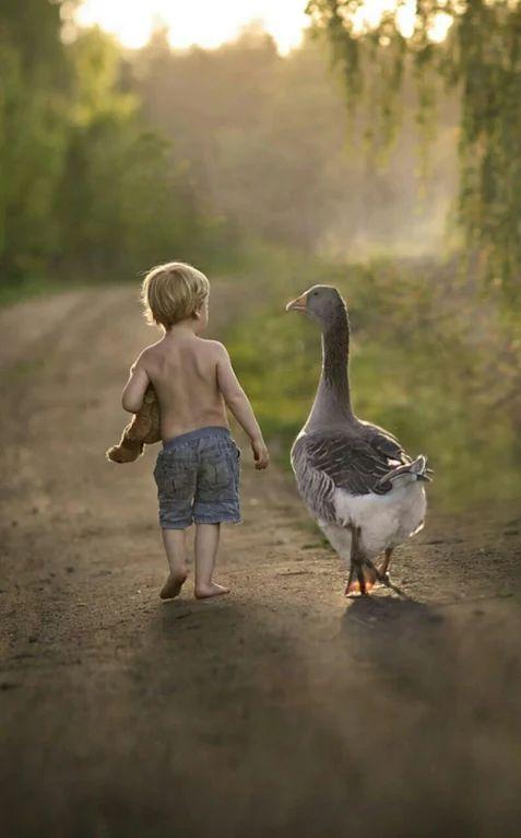 Băieţelul şi gâsca la plimbare pe drum