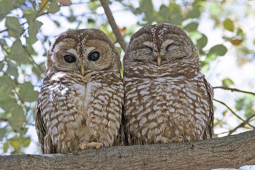 I love, love owls