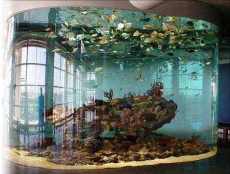 Pinterest the world s catalog of ideas for Large fish tank