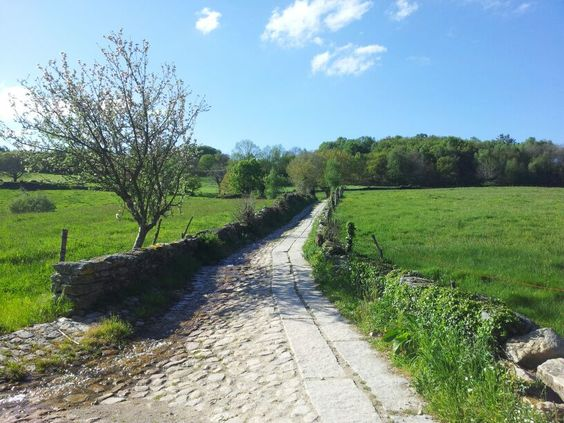 Camino de Santiago. Road. Chemin. Galicia