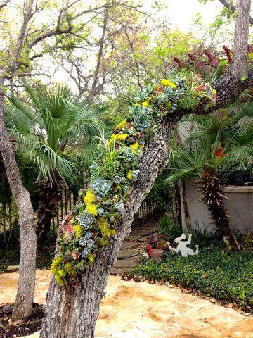 Vertical Garden | Succulent Wreath | Gallery | Succulent Designs | Abbey McKenna Succulent Designs