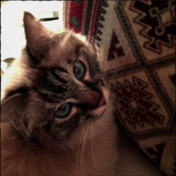 Negli occhi di un gatto ci si perde. Nicole Guiot-Tabernat