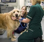 KENNEL CLUB CANCER CENTRE AT THE AHT MAKING PROGRESS IN THE FIGHT AGAINST CANCER
