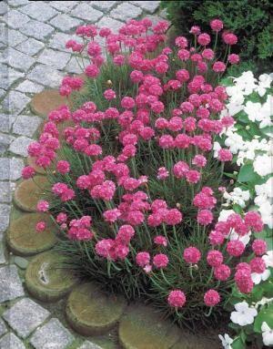 Pinterest le catalogue d 39 id es for Plantes a fleurs vivaces
