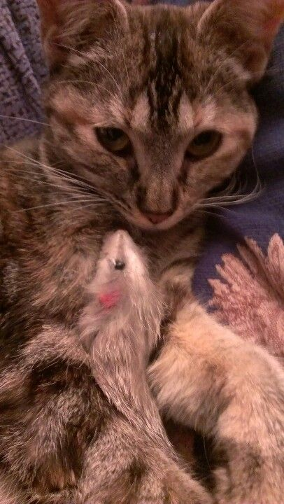 Princesita y su ratita