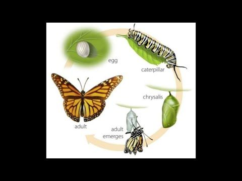 Lifecycle Of Butterfly 720p Youtube In 2021 Butterfly Simple Sentences