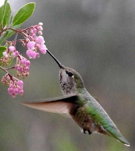 link to list of CA plants that attract hummingbirds, bees & butterflies