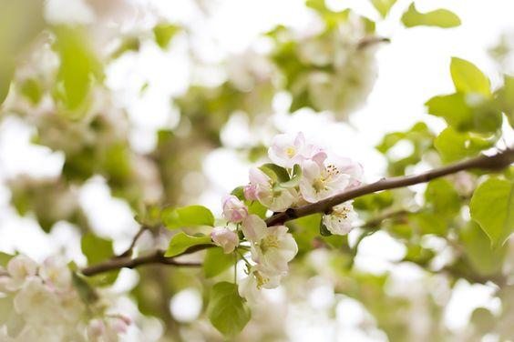 Spring blossoms  <3