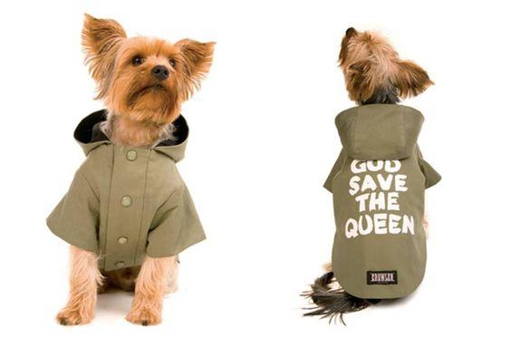 roupa de cachorro grande - Pesquisa Google