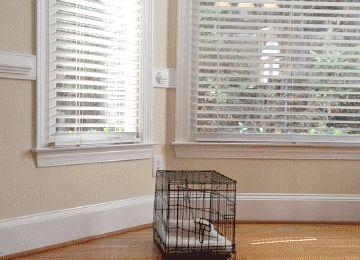 Dog Gets Pal Outta Jail