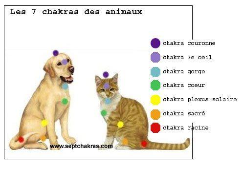 chakras-des-animaux