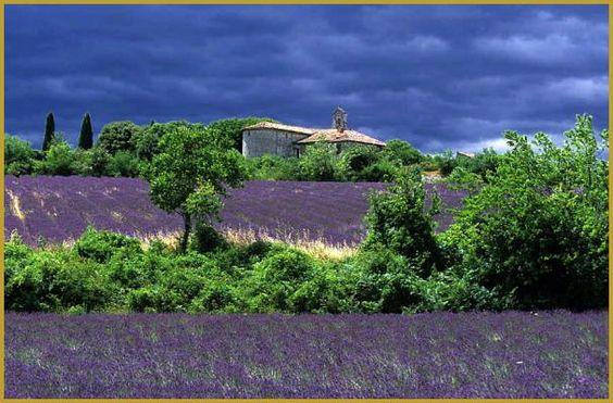 Photo une journée orageuse du mois de juillet des champs de lavande sur le ban…