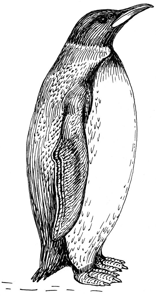Thermoregulation And Metabolic Energy Loss Of The Emperor Penguin Emperor Penguin Penguins Penguin Coloring Pages