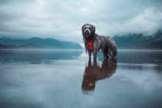 Companions Elizabeth Gadd Photography Photography Colour - Awe inspiring landscape photography elizabeth gadd